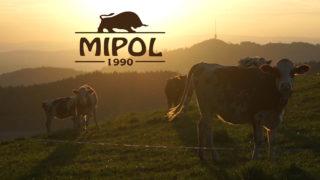 mipol-web-1